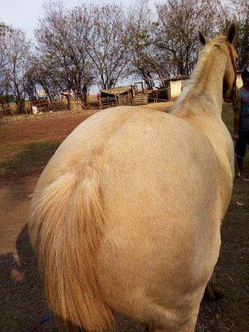 Vende se cavalo quarto de milha de vaquejada - Foto 3