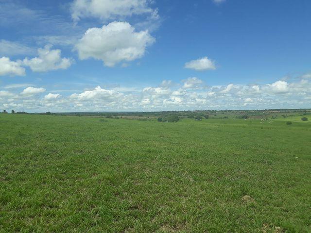 Fazenda com 190 hectares na região do vale de Monte  - Foto 18