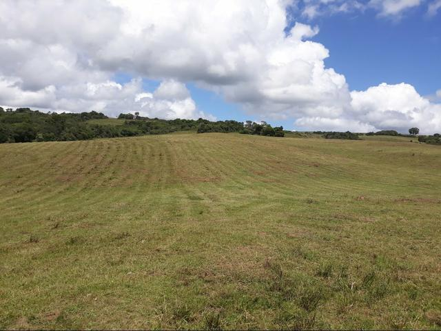 Fazenda 126 hectere