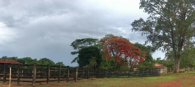 Fazenda plana e rica em água, 24 Alqueires (116.16 ha ) Bela Vista de Goias - Foto 10
