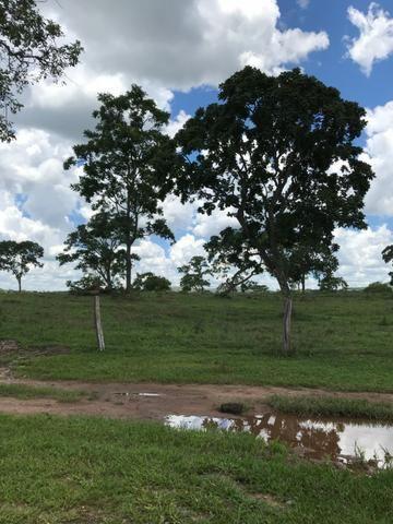 Oportunidade Extra Fazenda 100 Alqueires ou 484 Hectares Aragoiânia - Foto 3