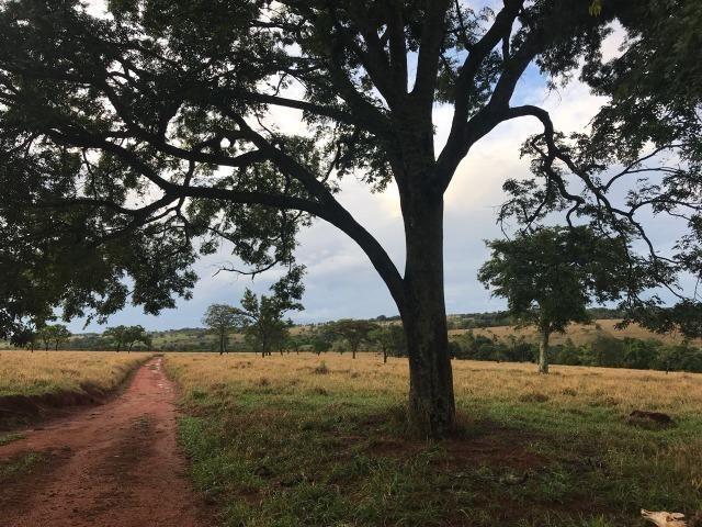 Fazenda plana e rica em água, 24 Alqueires (116.16 ha ) Bela Vista de Goias - Foto 2