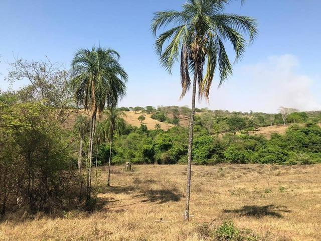 Fazenda a venda em Piracanjuba de 20 alqueires para Pecuária e lavoura - Foto 10