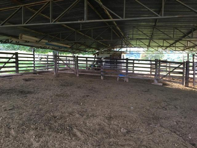 Fazenda 100 Alqueires, entre Professor Jamil e Piracanjuba - Foto 4