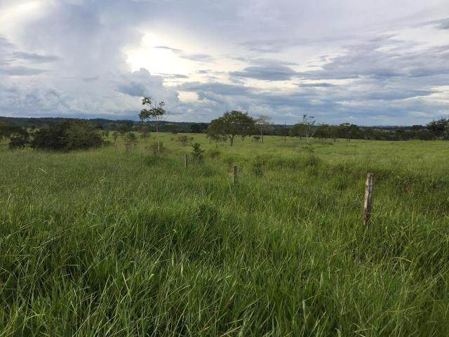 Fazenda 100 Alqueires, entre Professor Jamil e Piracanjuba - Foto 3