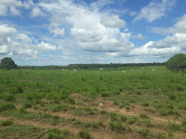 Fazenda com 190 hectares na região do vale de Monte  - Foto 13