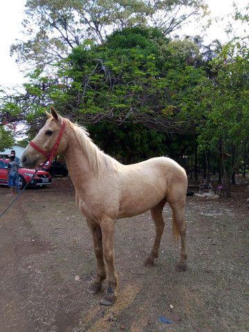Vende se cavalo quarto de milha de vaquejada - Foto 6