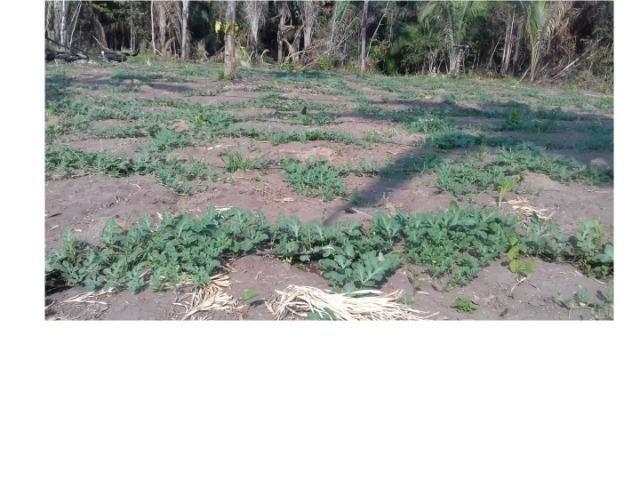 42 hectares, aceito camioneta, capão verde, terra preta,culturão, ocasião - Foto 9