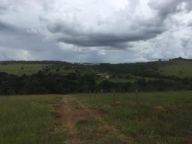 4 Alqueires c/ Rio p/ Lotear, Haras, Lazer, Gado. 40 km Anápolis-GO - Foto 13