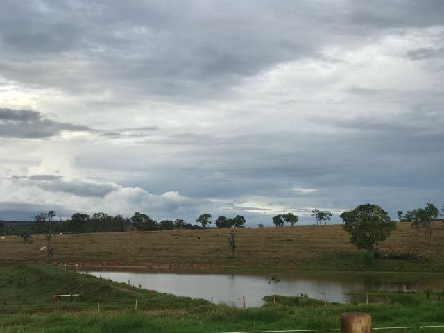 Fazenda plana e rica em água, 24 Alqueires (116.16 ha ) Bela Vista de Goias - Foto 14