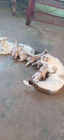 Gatos para adoção - Foto 6