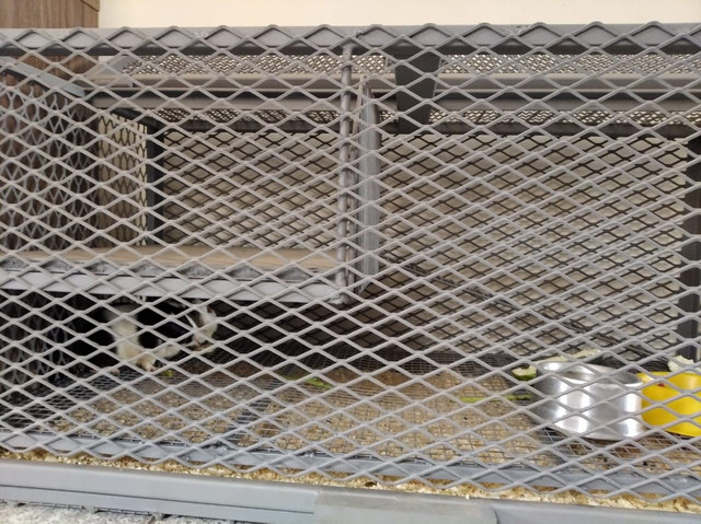 Gaiola para porquinho da Índia - Foto 5