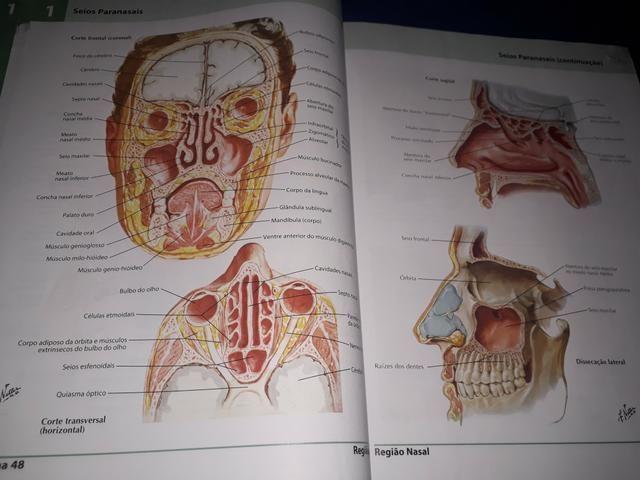 Dois Atlas de Anatomia Humana do Netter - volumes 1 e 2 - Foto 4