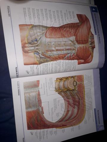 Dois Atlas de Anatomia Humana do Netter - volumes 1 e 2 - Foto 3