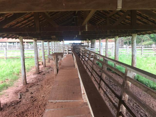 Vende-se Fazenda na Cidade de Dirce Reis-SP - Foto 18