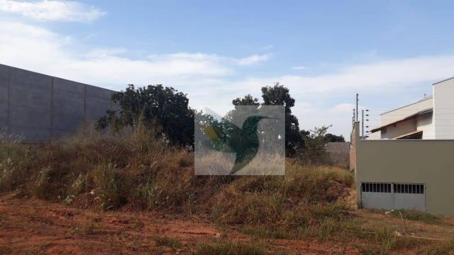Terreno à venda, 1125 m² por r$ 355.000 - jardim belo horizonte - Foto 7
