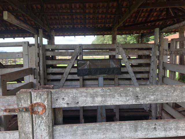 Vende-se Fazenda na Cidade de Dirce Reis-SP - Foto 15