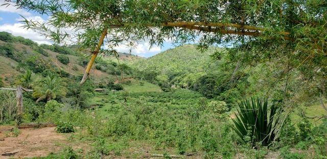 Fazenda 295 hectares próximo de Governador ValadaresMG - Foto 11