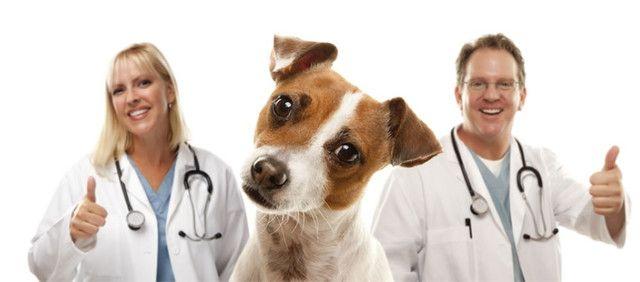 Veterinário para lecionar em curso de aux. veterinário, em ponta grossa período noite