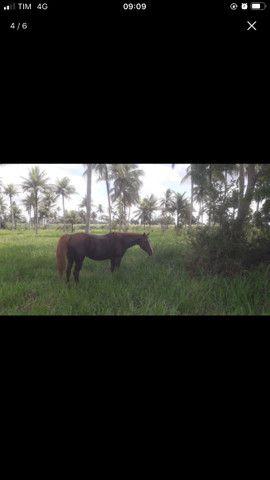 Égua qm - Foto 3