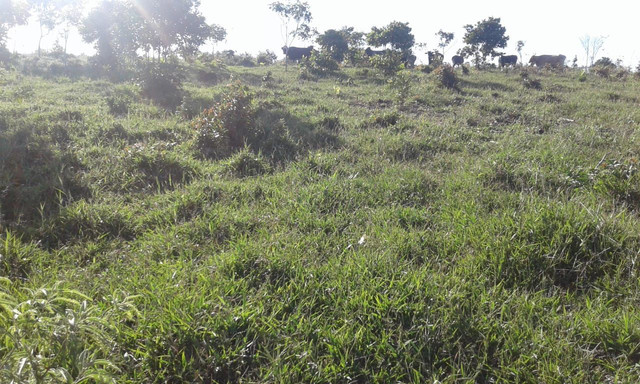 faz com 200 hectares na Bahia 280.000 - Foto 3