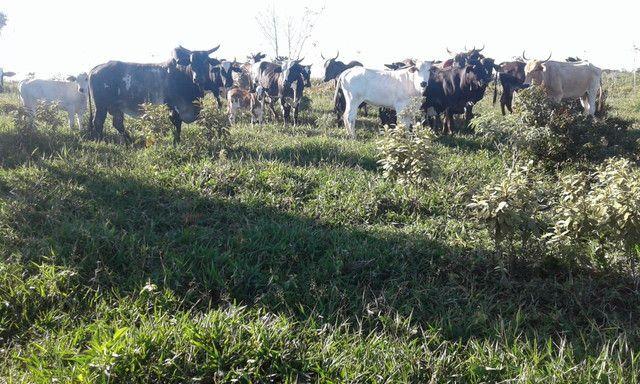 faz com 200 hectares na Bahia 280.000 - Foto 6