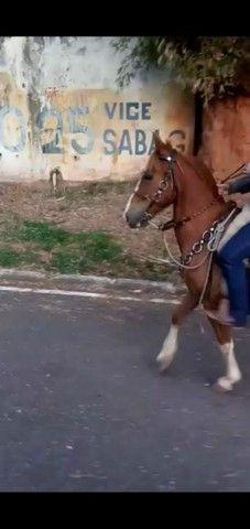 Cavalo mangalarga paulista / marchador  - Foto 2