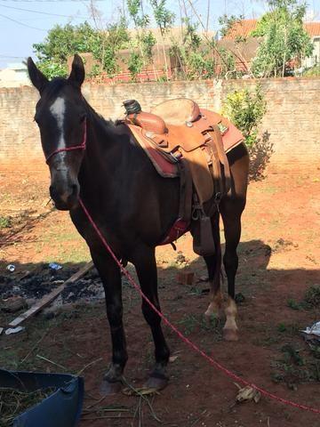 Cavalo meio sangue manga larga - Foto 5