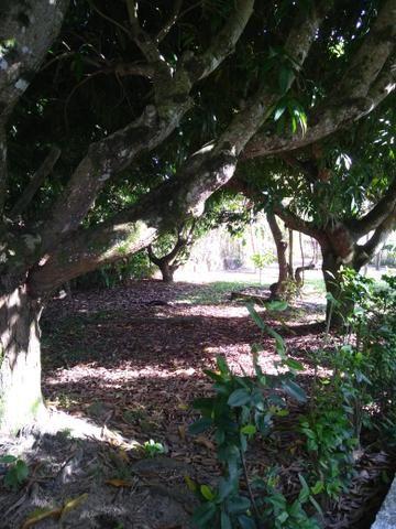 Sítio na ilha Taíru, 08 minutos da praia - Foto 6