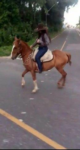 Cavalo mangalarga paulista / marchador