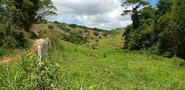 Fazenda 295 hectares próximo de Governador ValadaresMG - Foto 3