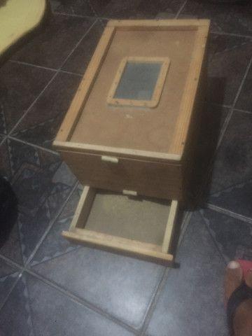 Caixa de Tenébrio molidor - Foto 5
