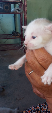 Gatos para adoção - Foto 4