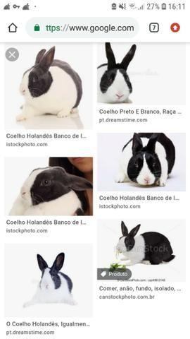 Procuro coelho