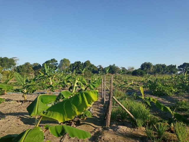 Vendo sitio em Porto Seguro, Vale Verde - Foto 15