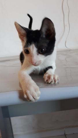 Gato pra adoção. - Foto 5