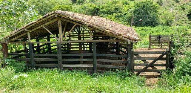 Fazenda 295 hectares próximo de Governador ValadaresMG - Foto 9