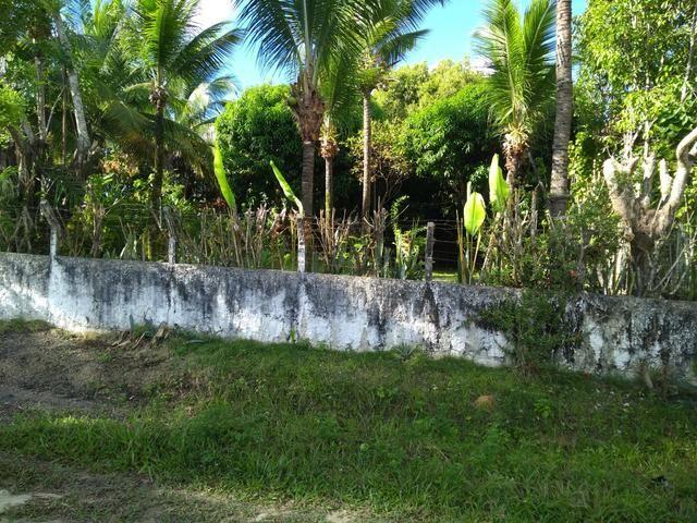 Sítio na ilha Taíru, 08 minutos da praia - Foto 3