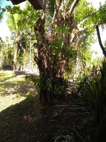 Sítio na ilha Taíru, 08 minutos da praia - Foto 7