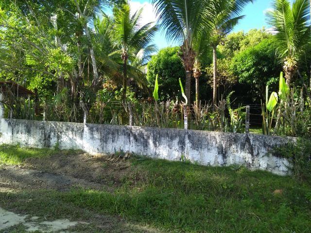 Sítio na ilha Taíru, 08 minutos da praia - Foto 14