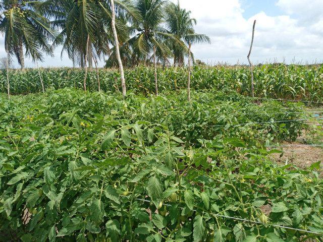 Fazenda com 20 hectares no jardins com irrigação  - Foto 6