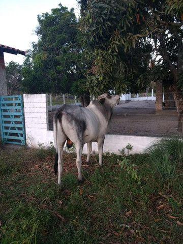 Para quem procura granja estruturada em Monte Alegre - Foto 2