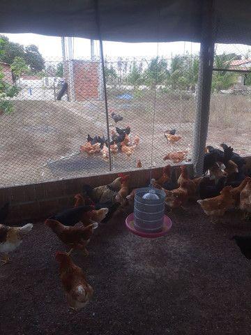 Ovos de galinha caipira  - Foto 2