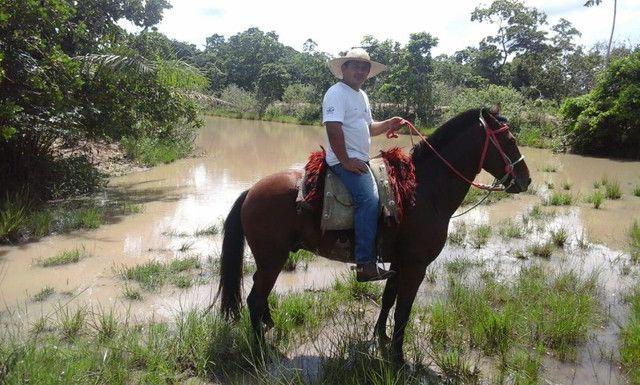 Cavalo - Nome Majestoso - Foto 3