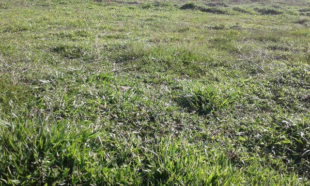 faz com 200 hectares na Bahia 280.000 - Foto 2