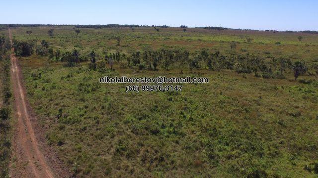 Fazenda arrenda 2.000 hectares nordeste mt nikolaiimoveis