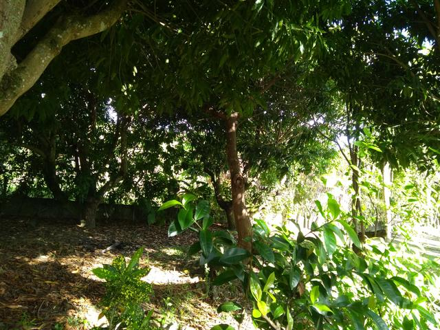 Sítio na ilha Taíru, 08 minutos da praia - Foto 11