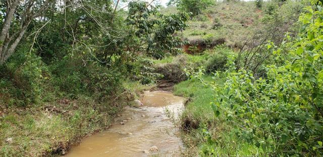 Fazenda 295 hectares próximo de Governador ValadaresMG - Foto 10