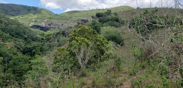 Fazenda 295 hectares próximo de Governador ValadaresMG - Foto 5