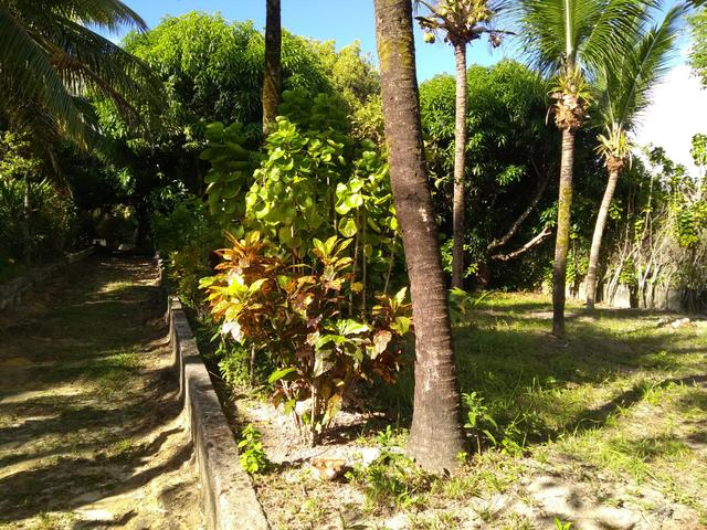 Sítio na ilha Taíru, 08 minutos da praia - Foto 10